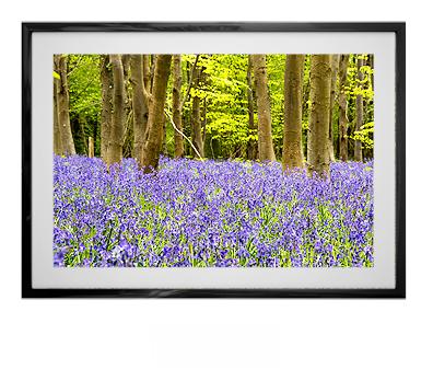 Liz Bugg - Misc Gallery